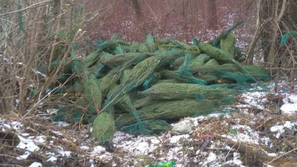 Брянцы обнаружили на озере Орлик свалку новогодних елей