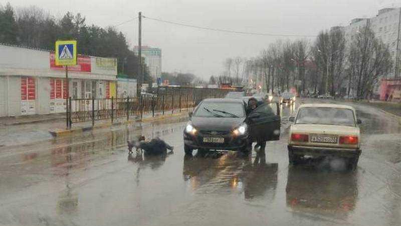 В Брянске на Новостройке легковушка сбила мужчину с собакой