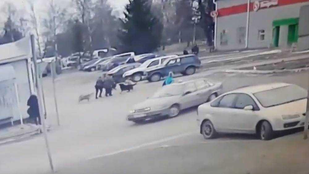 На жителя Навли возле магазина набросились четыре собаки