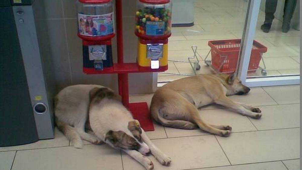 Бездомные псы облюбовали магазин «Магнит» в Брянске