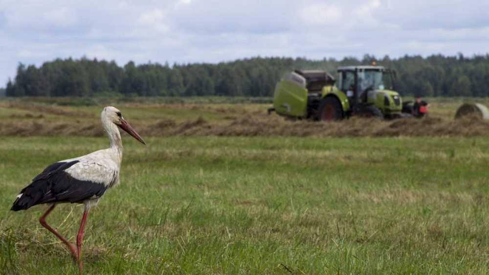 «Мираторг» увеличит посевные площади на 10 % до 660 тысяч га в рамках межрегионального проекта мясного скотоводства в 2020 году