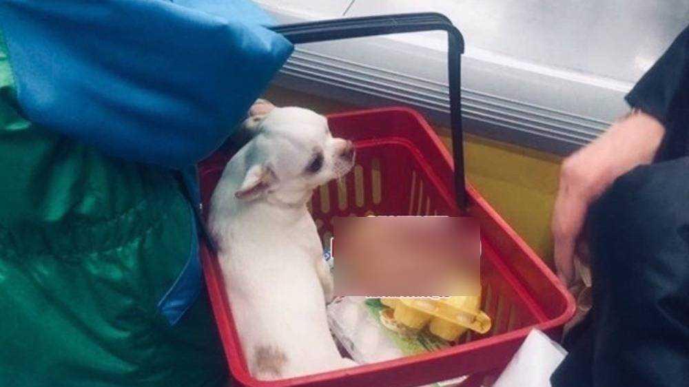 Собака в продуктовой корзине в магазине разозлила жителя Брянска