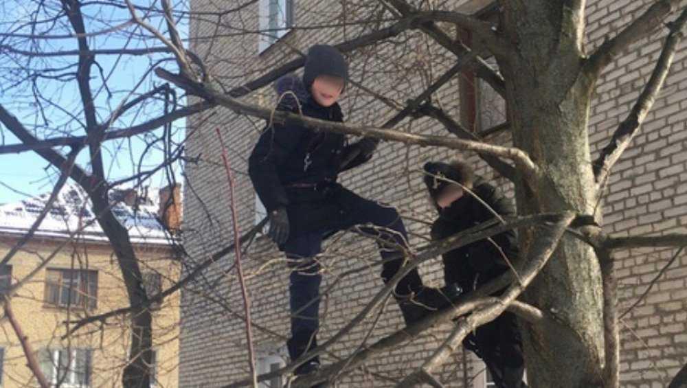 Лазавшие по деревьям дети удивили брянцев