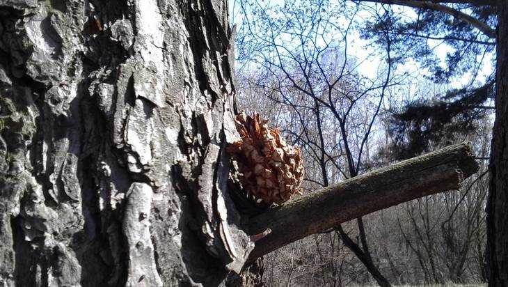Жителям Брянской области 7 апреля пообещали 17 градусное тепло