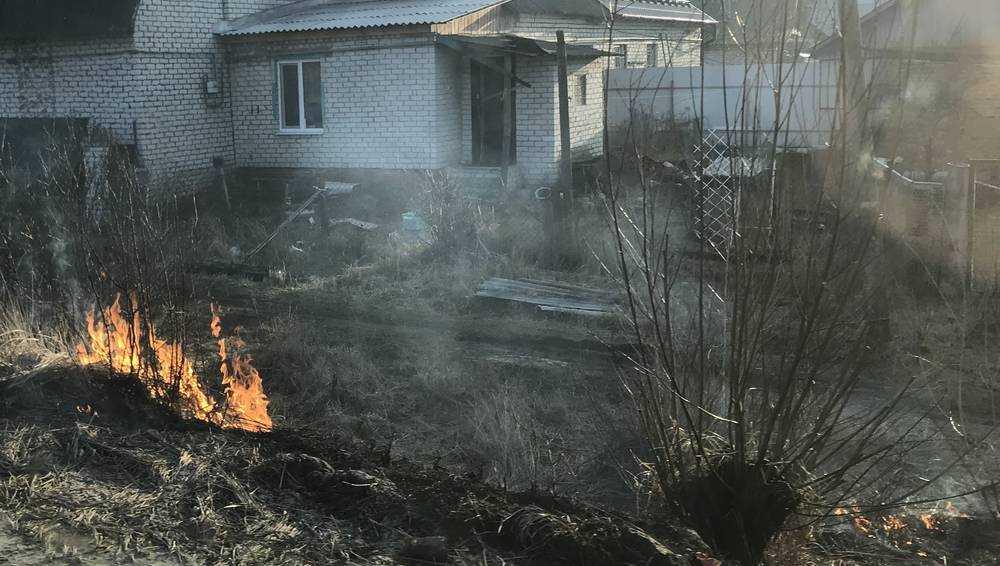 Жители брянской Жуковки начали деловито жечь город