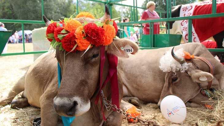 В Брянской области численность скота превысила 492 тысячи голов