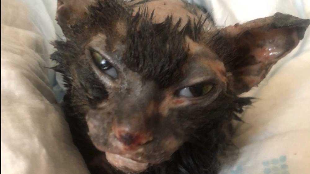 В Брянске брошенный детьми в трансформаторную будку кот не выжил
