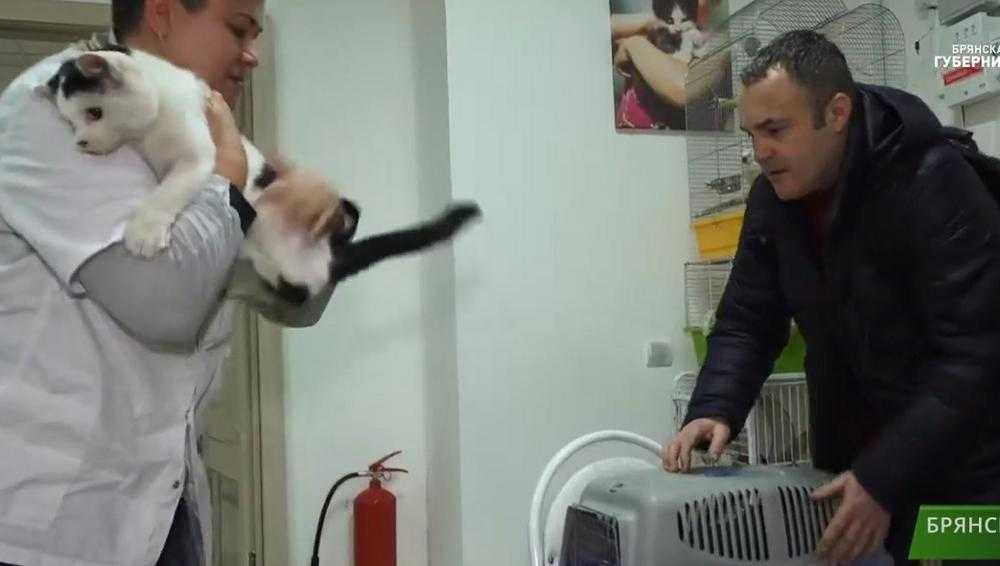 Житель Сельцо выходил ослепшего из-за петарды кота