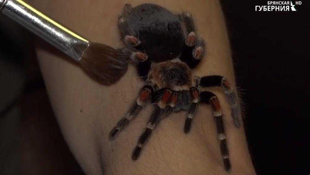 Брянец завел в квартире около 50 экзотических пауков