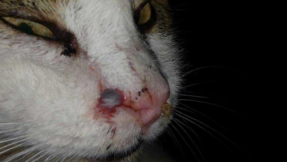 В Карачеве кота ранили пулей из пневматического оружия