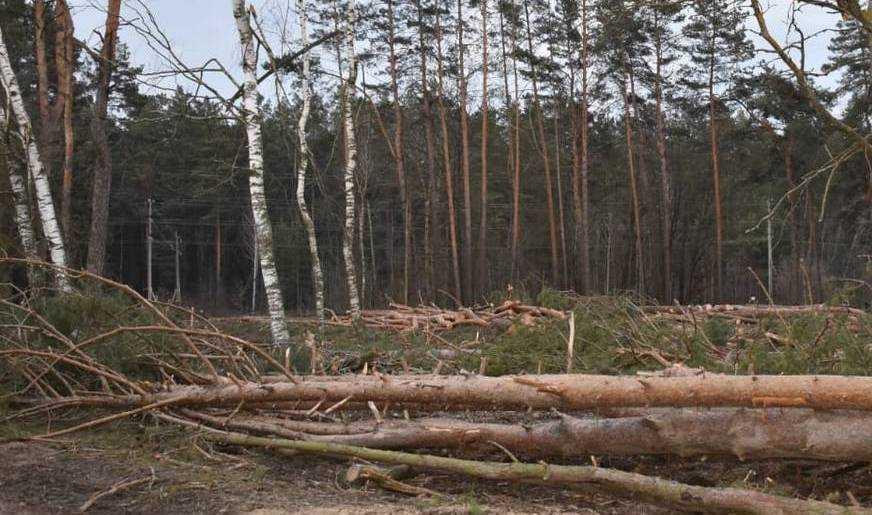 Брянские бизнесмены стали добывать лес даже на кладбищах