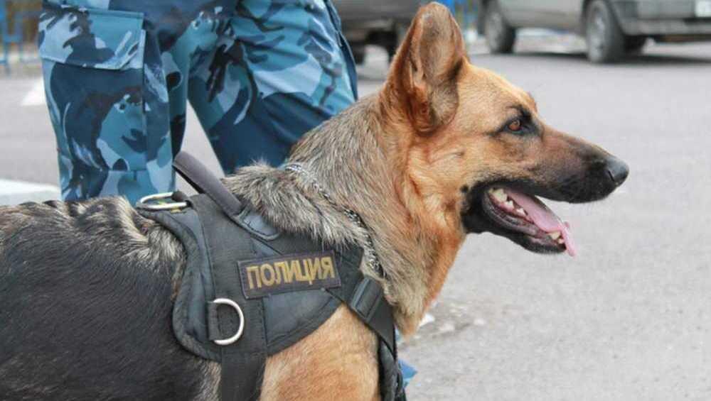 В Фокино овчарка Вита привела полицейских к квартире вора