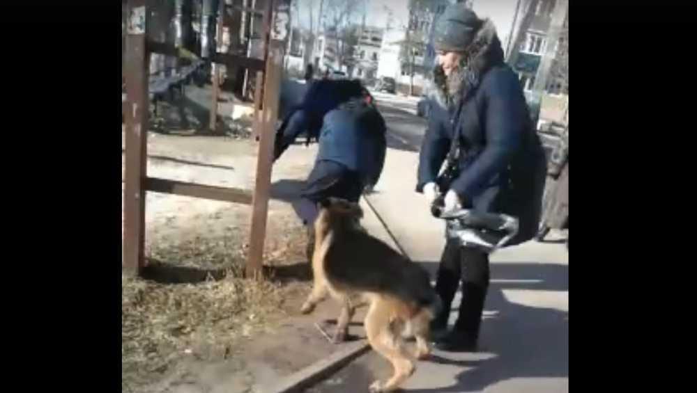 В Белых Берегах сняли видео нападения овчарки на детей