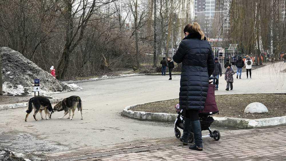 В Брянске в парке «Соловьи» открыли псарню Владимира Анопко