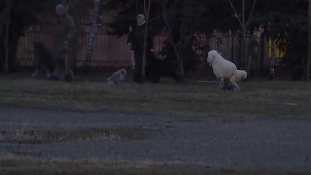 Житель Брянска с помощью полиции изгнал «собачников» со стадиона