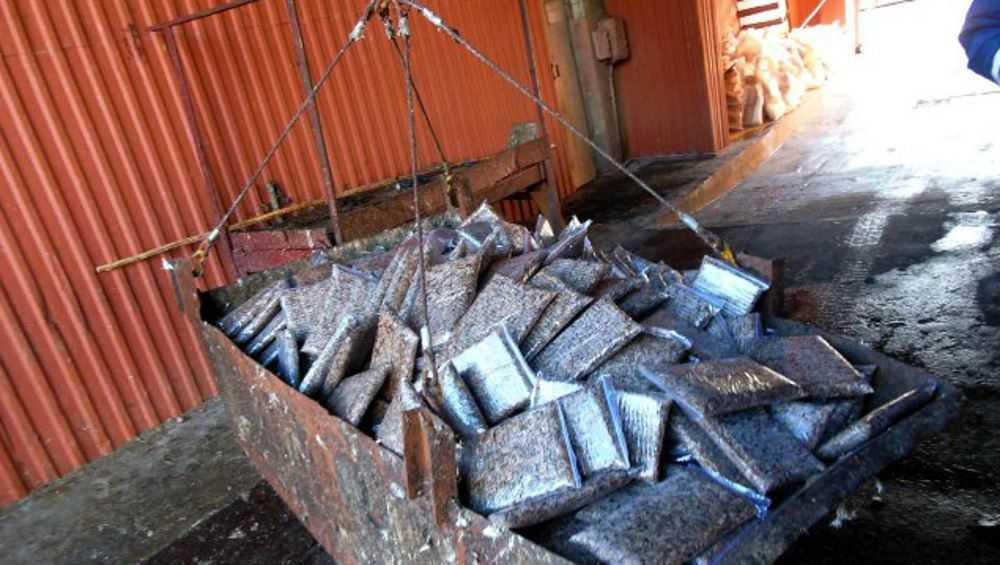 В Брянской области уничтожили нелегальную партию замороженных сверчков