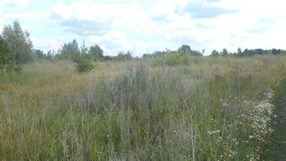 В Сураже у брянца отобрали заброшенный земельный участок