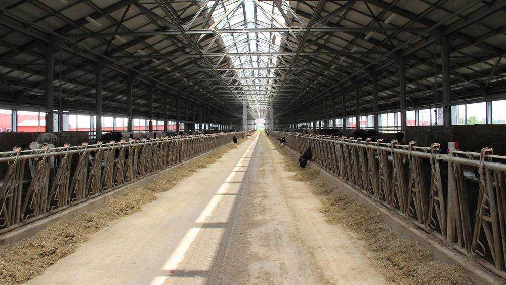 Экспорт брянского животноводства за год вырос в три раза