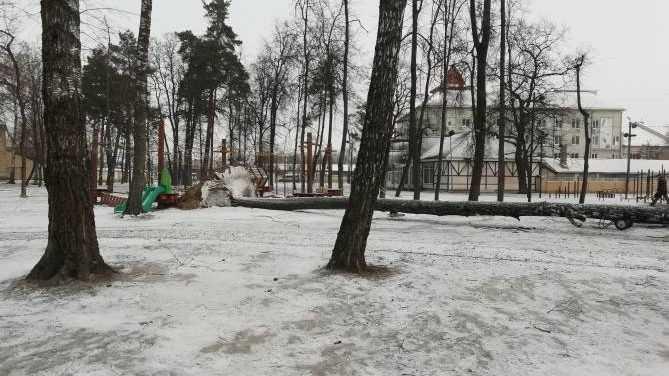 В Майском парке Брянска возле детской площадки рухнуло огромное дерево