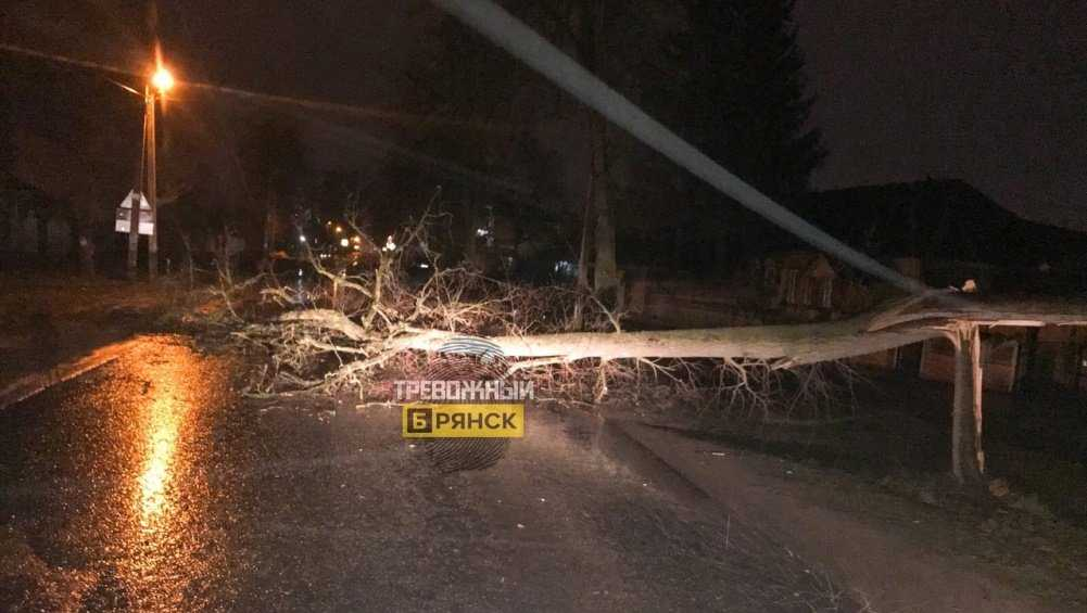 В Брянске рухнуло дерево на улице Куйбышева