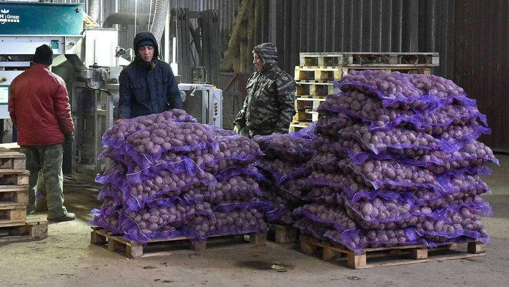 Брянская область экспортировала картофель в 16 стран, а лес – в 17