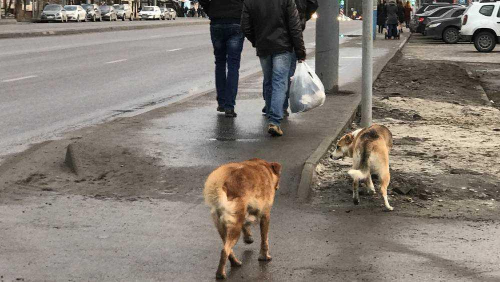 Главу администрации Брянска Макарова обязали отловить бродячих собак