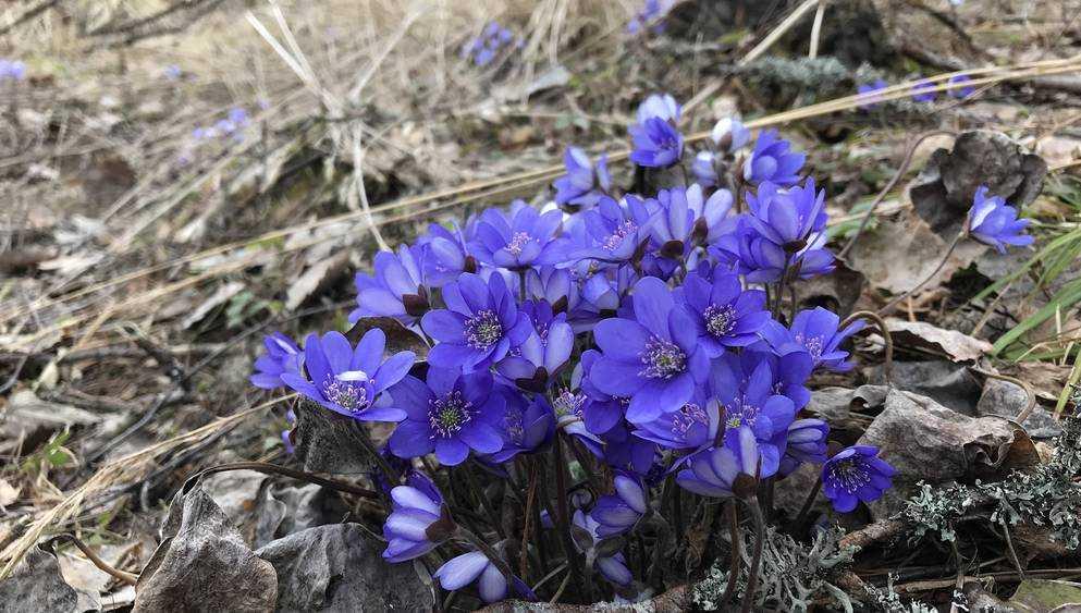 В Брянскую область 18 марта придёт 10-градусное тепло