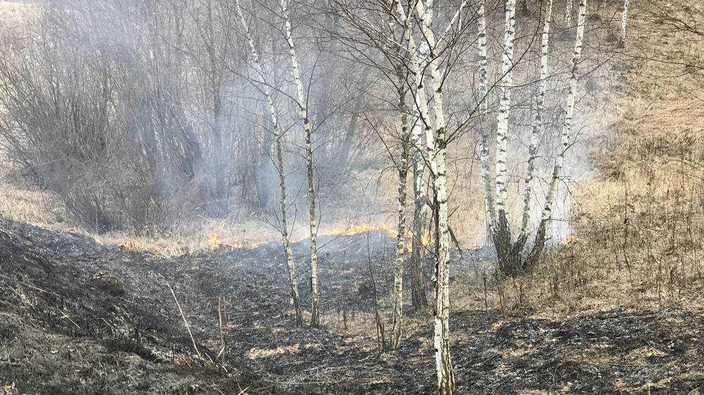 В Брянской области потушили больше 70 травяных пожаров за сутки