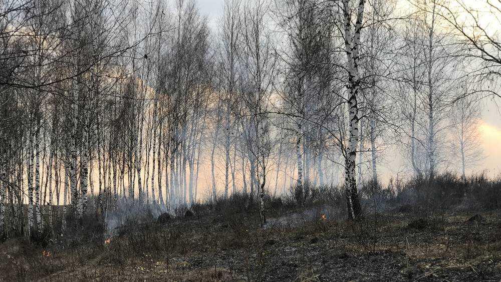 В Брянской области потушили шесть лесных пожаров