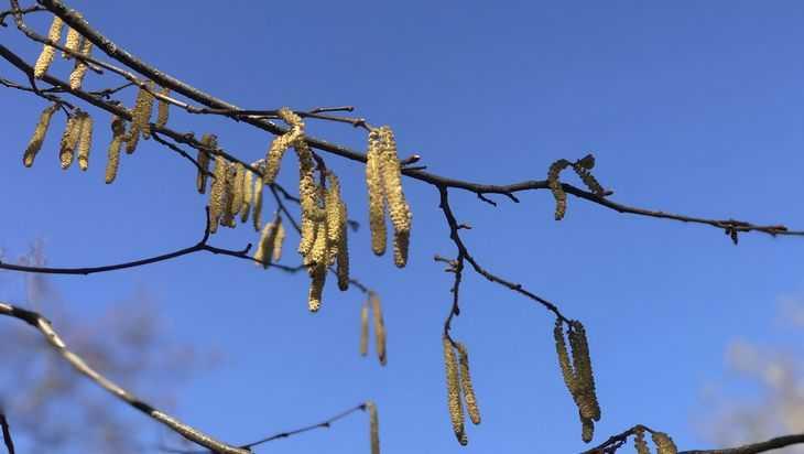 В Брянской области 2 мая потеплеет до 22 градусов и прогремят грозы