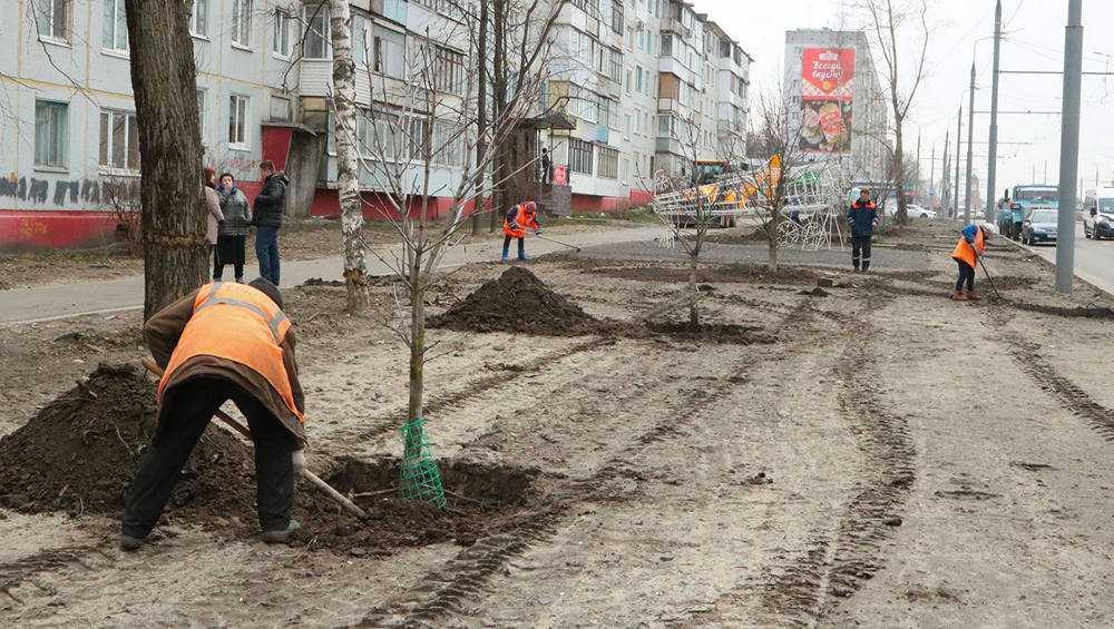 В Брянске каштаны с Советской улицы пересадили на Авиационную