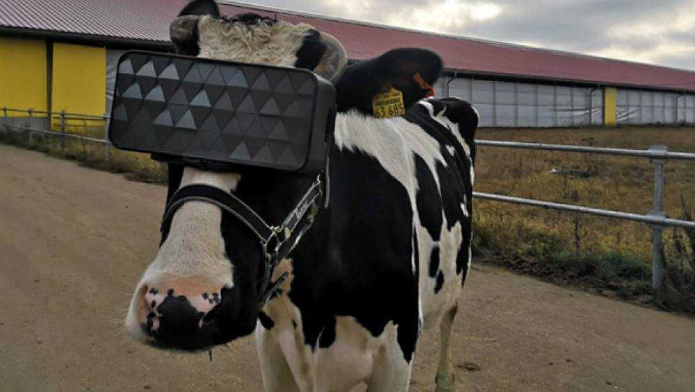 В Брянской области нашли фантомного производителя сыра
