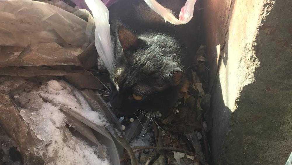 Брянцев разозлила женщина, выбросившая на улицу кошку в пакете