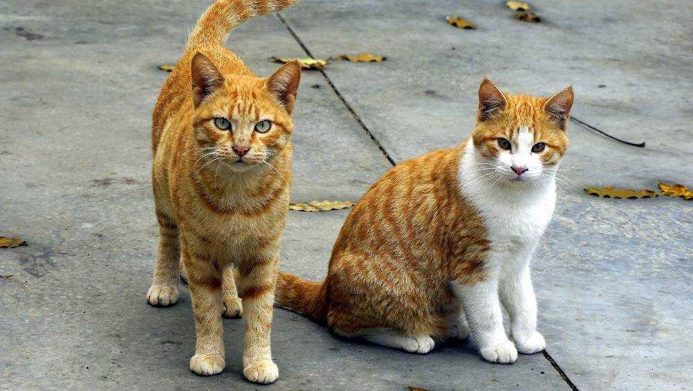 В Брянске на Почтовой улице потравили кошек