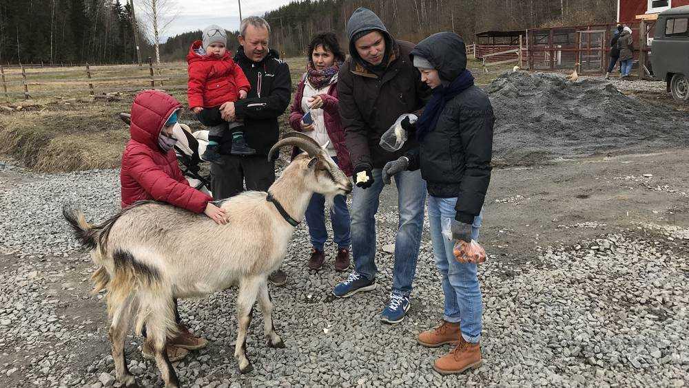 В Дятьковском районе 40 семей купили за счет казны коз и кроликов