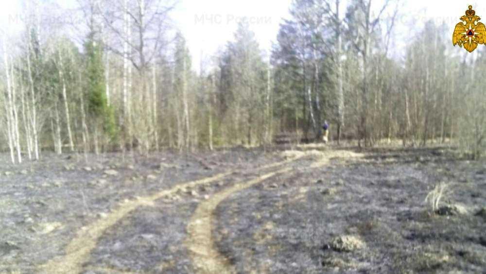 Телеканал «Россия» рассказал о лесных пожарах в Брянской области
