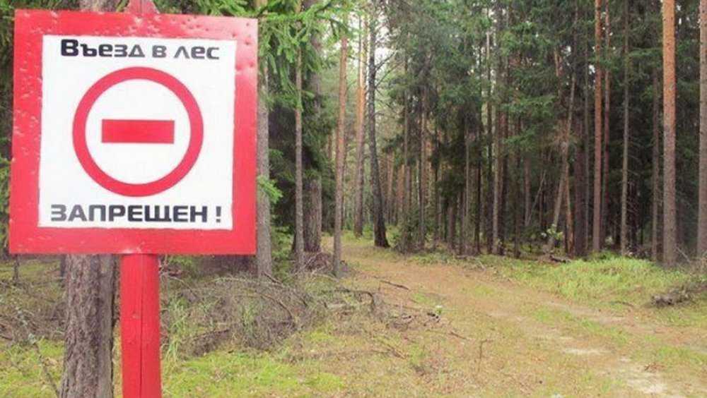 В Брянской области запретили посещение лесов