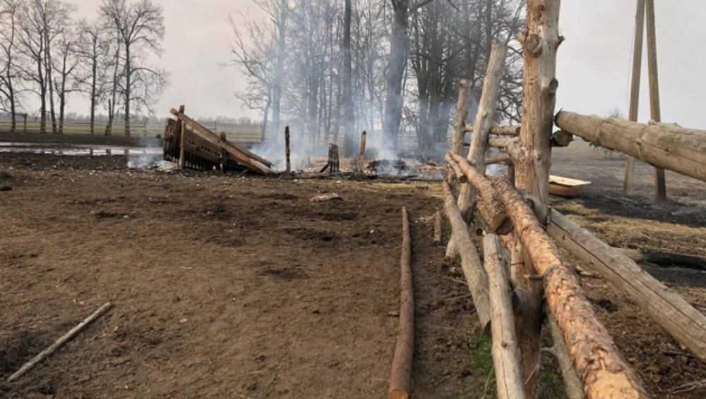В Клинцовском районе при пожаре пострадали лошади