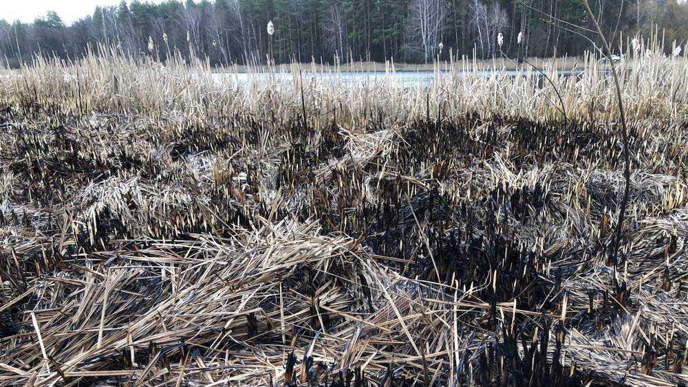 На вышках связи установят камеры наблюдения за чернобыльским лесом
