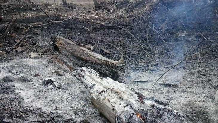 В Трубчевском районе из-за сжигания травы едва не сгорели дома