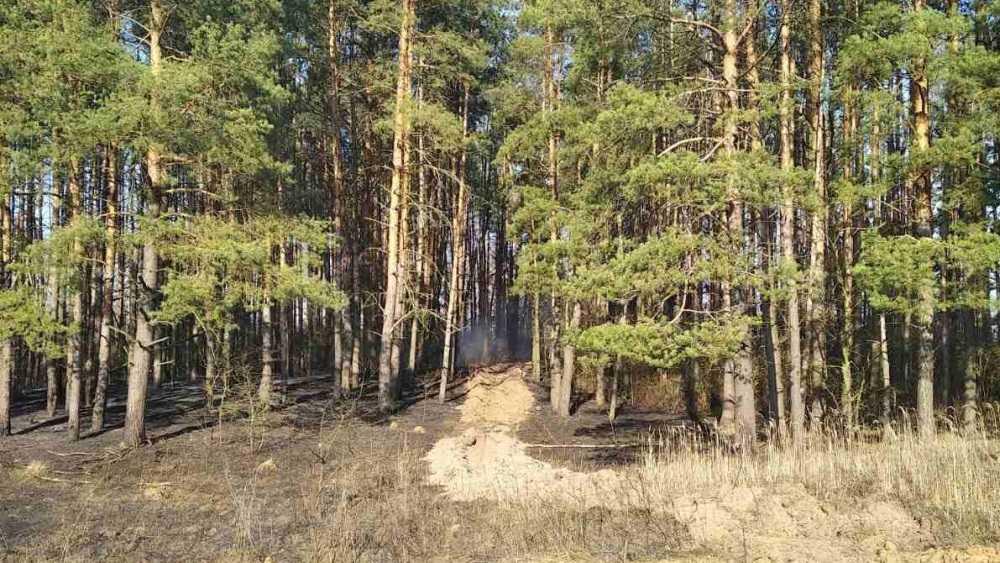 В Брянской области 8 сентября ввели особый противопожарный режим