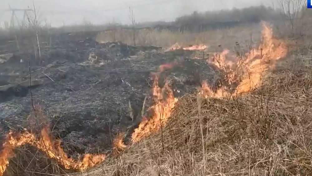 Разгневанные жители Брянска обратились к поджигателям травы