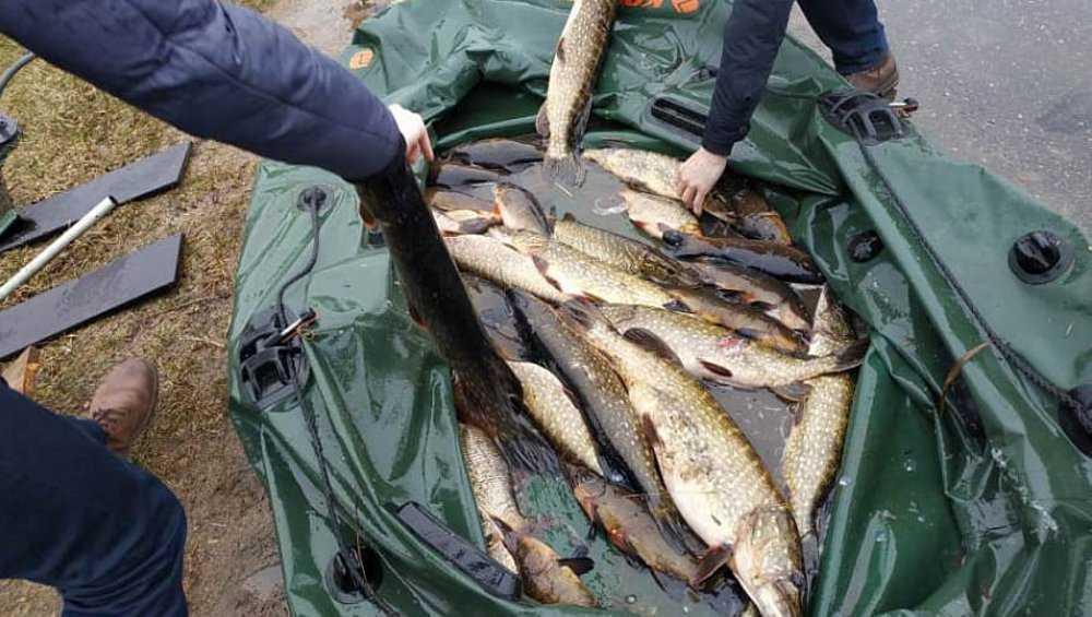 Брянцев призвали не покупать рыбу у браконьеров