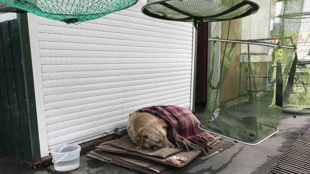 Все включено: на рынке в Брянске бродячим собакам дали даже пледы