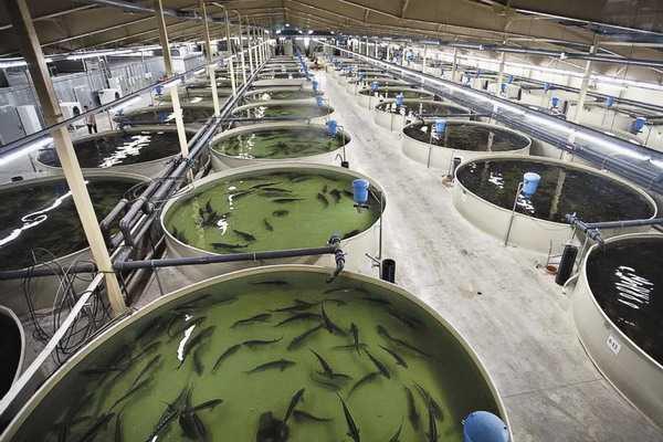Особенности деятельности по разведению рыбы
