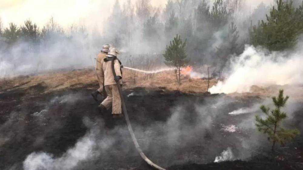 Ученый оценил опасность чернобыльских пожаров для Брянской области
