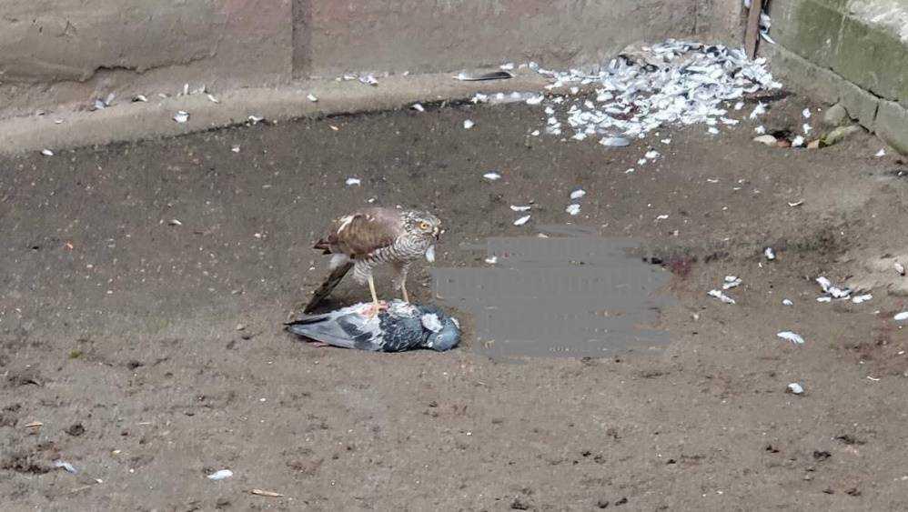 На опустевшей из-за коронавируса улице Брянска заметили ястреба