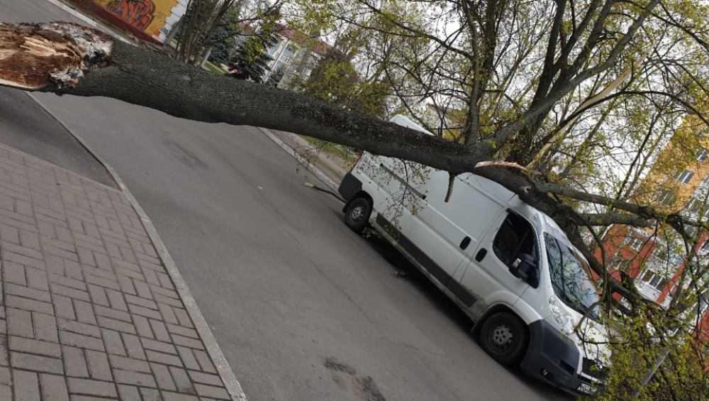 В Фокинском районе Брянска дерево рухнуло на микроавтобус