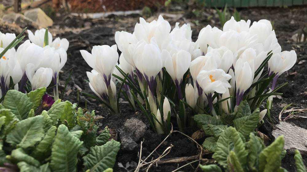 Брянцев предупредили о ночном морозе и шквальном ветре 21 апреля