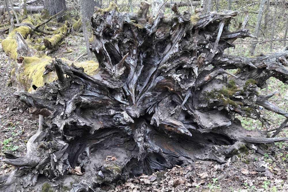 Брянский корне-вирус